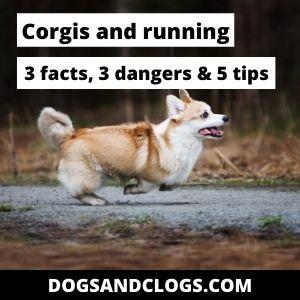 Corgis And Running