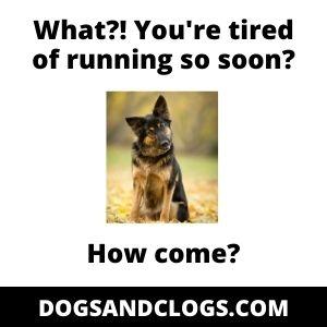 Energetic_German Shepherd Puppy