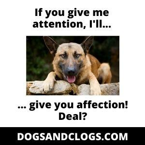 German Shepherd Affection Attention Meme
