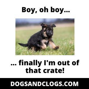 German Shepherd Crate Training Meme