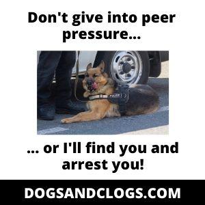 German Shepherd Drug Detector Meme