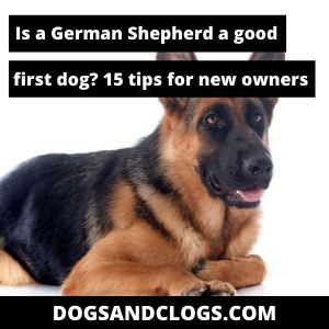 Are German Shepherd Good First Dogs