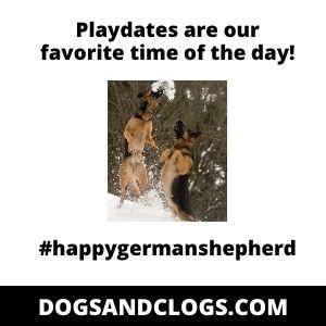 German Shepherd Playdates Meme