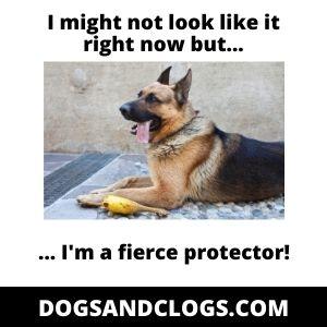 German_Shepherd Protector Funny
