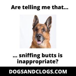 German Shepherd Sniffing Meme