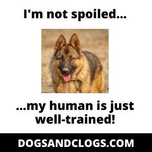 German Shepherd Spoiled Meme