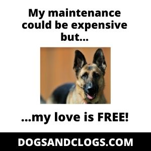 German Shepherds Are Not Cheap