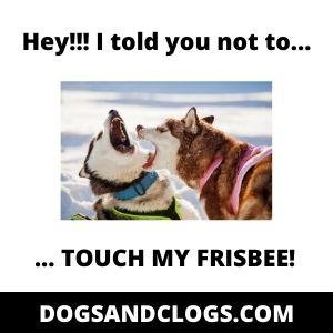 Husky Arousal Aggression Meme