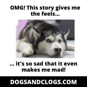 Husky Emotional Aggression Meme