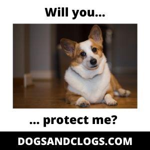 Protect Me Corgi
