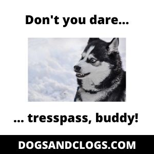 Territorial Husky Meme