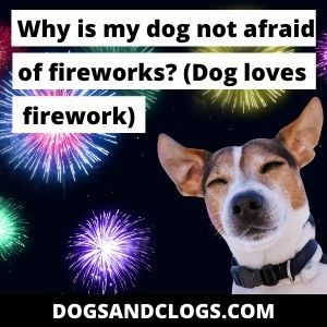Why Is My Dog Not Afraid Of Fireworks