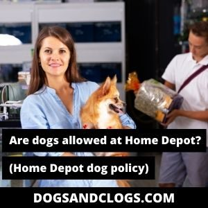Are Dogs Allowed At Home Depot
