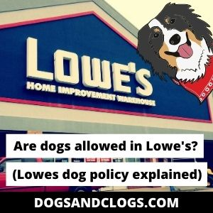 Are Dogs Allowed In Lowe's? Dog Policy