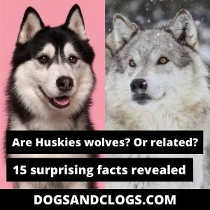Are Huskies Wolves Or Related
