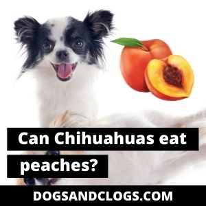 Can Chihuahuas Eat Peaches