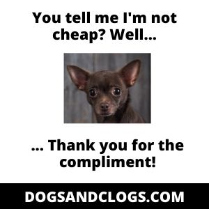 Chihuahua Puppy Price