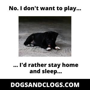 Depressed Puppy Lazy