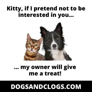 5 Reasons Why Your Dog Is Obsessed With Your Cat + 5 Tips