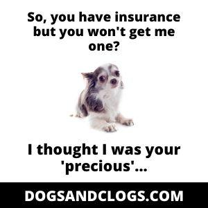 Chihuahua Insurance Price