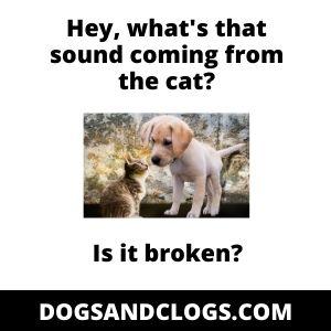 Dog Interested In Cat Sound Meme