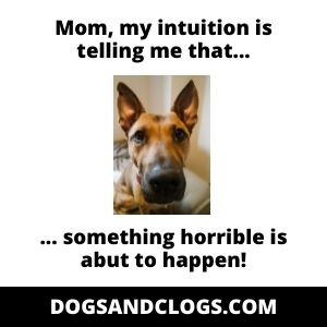 Dog Intuition