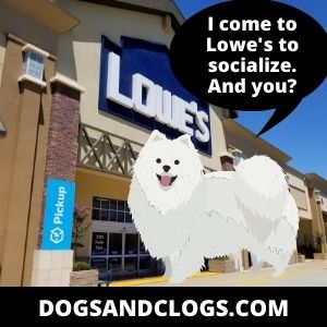 Dog Goes To Lowe's To Socialize