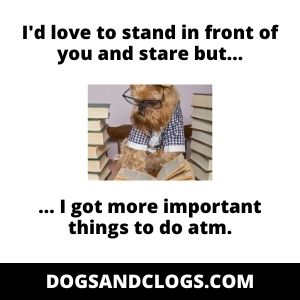 Dog Stand And Stare Meme