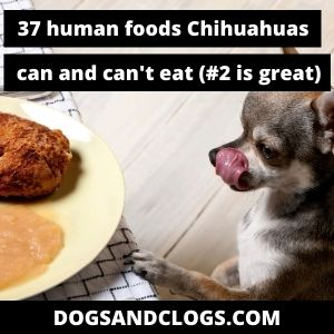 Human Foods Chihuahuas Can And Can't Eat