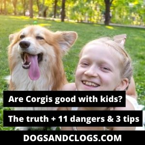are corgis good with kids