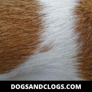 Dog Fur Allergy