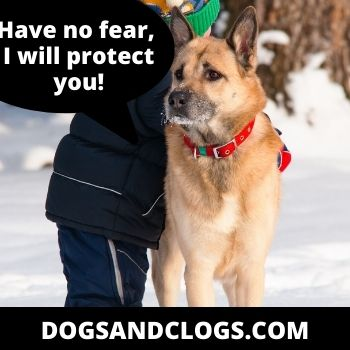 Dog Wants To Be Close To Protect You