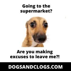 Clingy Dog Meme
