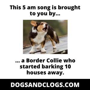 Corgi Barking With Other Dogs Meme