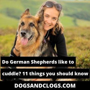 Do German Shepherds Like To Cuddle