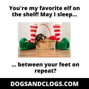 Dog Sleeping Between Feet Christmas Meme