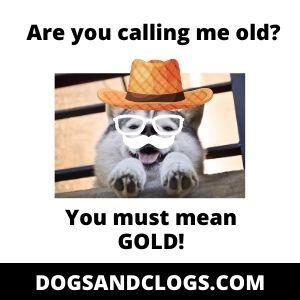 Fta Old Husky Meme