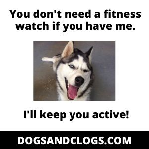 Happy Active Husky