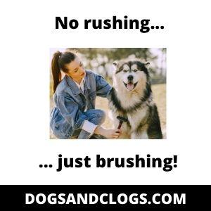Husky Brushing Meme