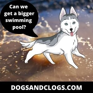 Husky In Dirty Water