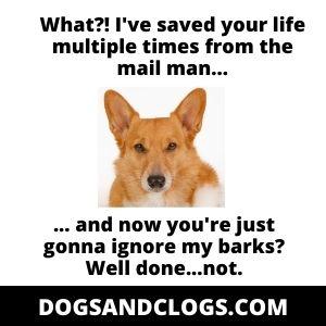 Ignore Your Corgis Barks Meme