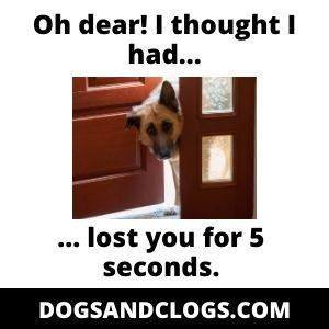 Separation Anxiety Velcro Dog Meme
