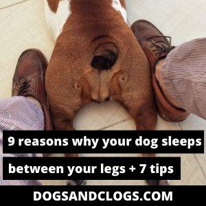 Why Does My Dog Sleep Between My Legs