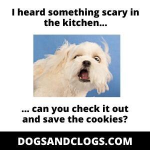 Anxious Dog Meme