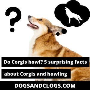 Can Corgis Howl