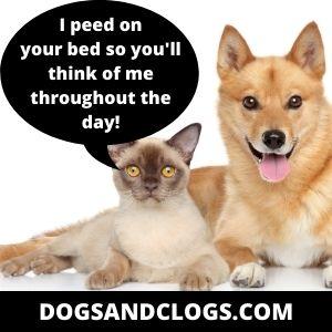 Cat Urine Marking On Dog Bed