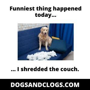 Destructive Dog Shredded Couch Meme