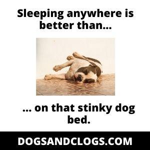 Dog Sleeping On The Floor Instead Of In Bed Meme