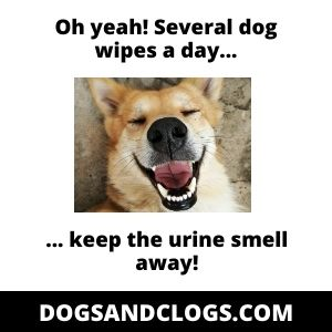 Pet Wipes Keep Urine Smell Away