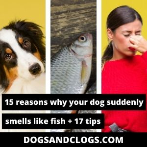 Why Does My Dog Suddenly Smell Like Fish